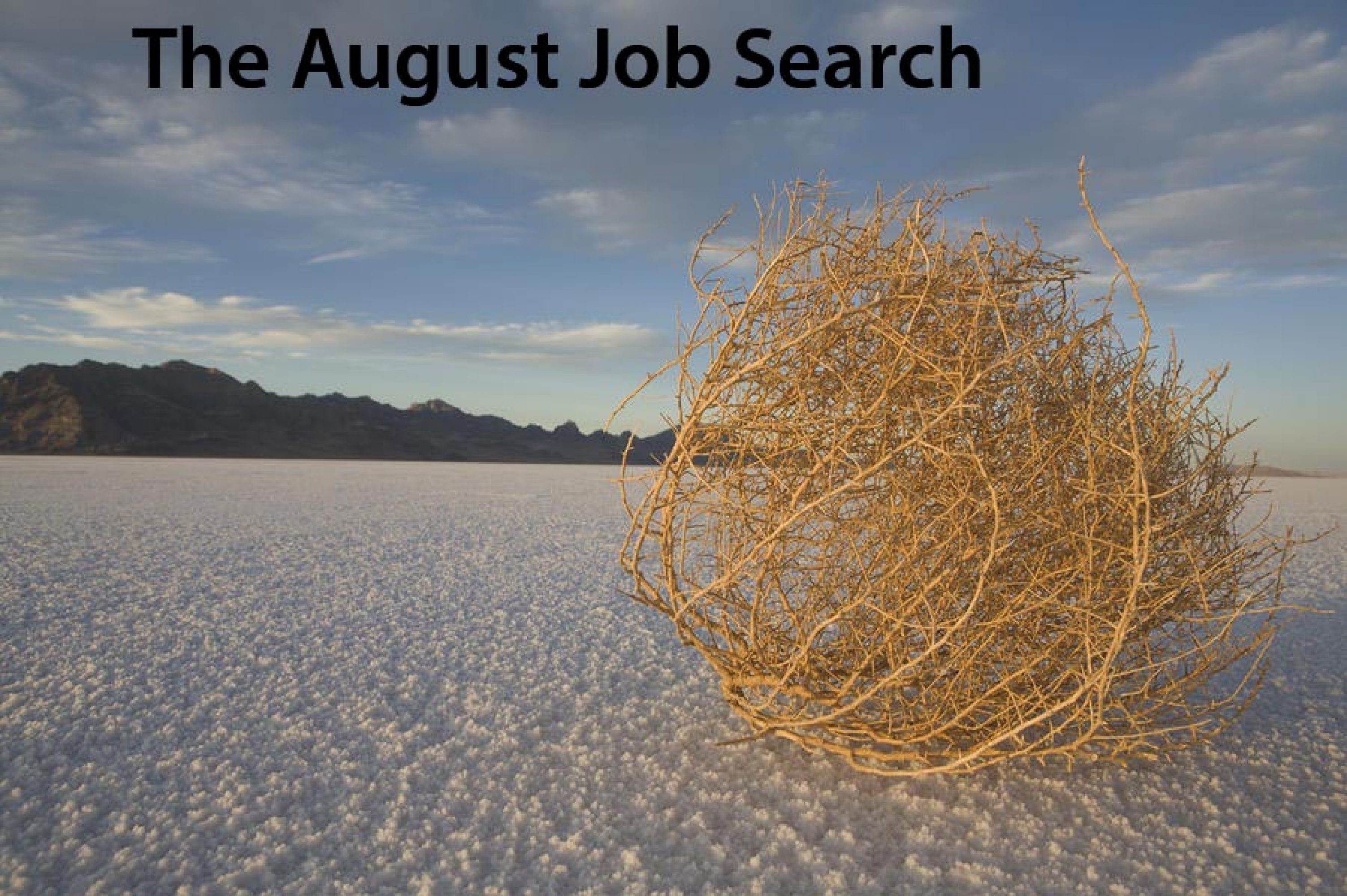 the august job search